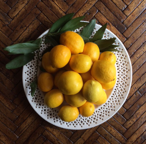 meyer lemons first yield